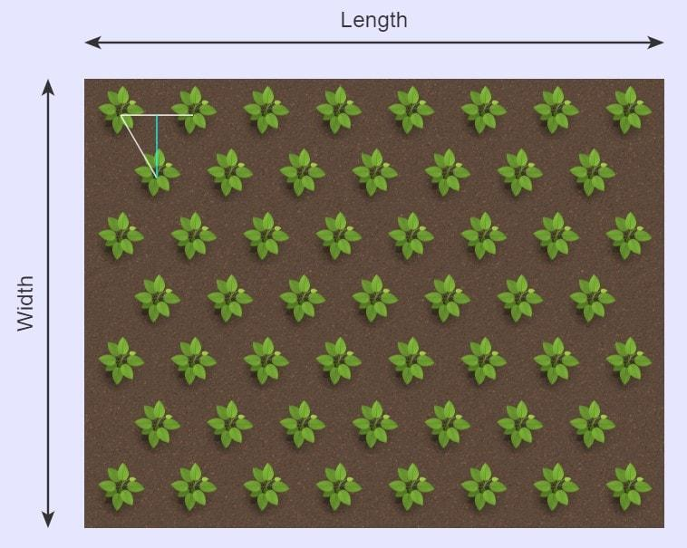 Plant Calculator Triangular